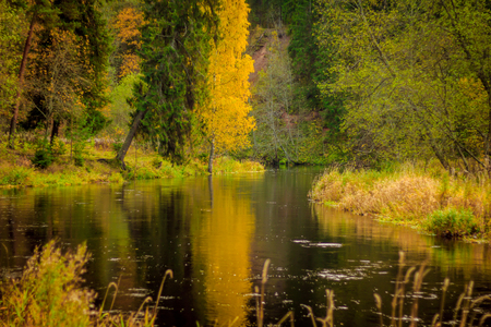 autumn landscape by the river. river and forest. overcast weather. mid autumn. october autumn landscape outside the city