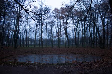 Autumn morning park with fog. gloomy park. Misty park.