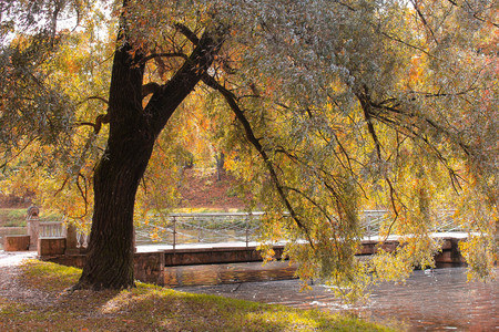 Autumn park in clear sunny weather. Park of Russia. Golden autumn 免版税图像