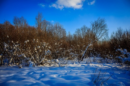 Winter Forest Park. Winter forest in sunny weather. Park like a forest. Stock Photo