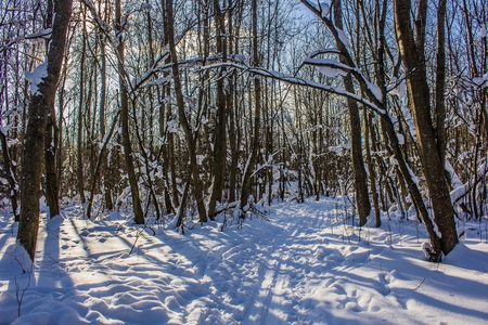Winter Forest Park. Winter forest in sunny weather. Park like a forest. Stock fotó