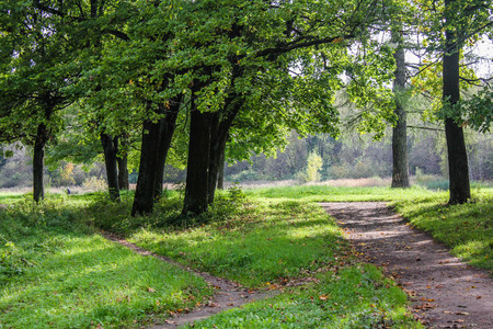 Spring Park with young greens. Russian park. Spring landscape. Young greens. Stock Photo