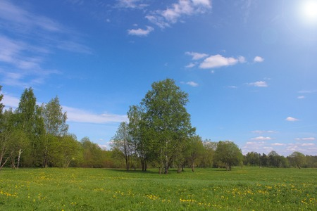 spring landscape. young greens in the field. field landscape and forest in the background Stock Photo