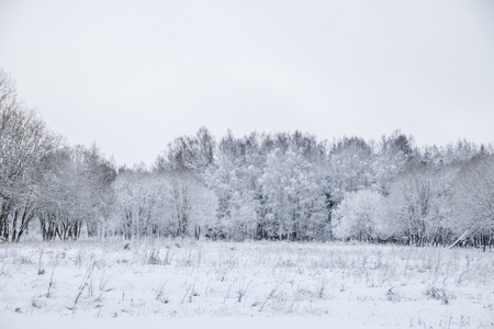 Winter landscape in cloudy weather. Winter Park. Expanses of Russia 免版税图像