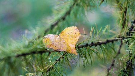 Autumn leaf . Bright autumn leaf. Change sheet color Banco de Imagens