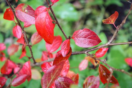 Autumn leaf . Bright autumn leaf. Change sheet color 版權商用圖片