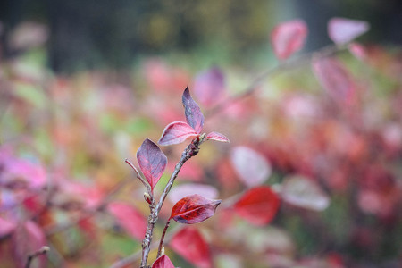 Autumn leaf . Bright autumn leaf. Change sheet color Stok Fotoğraf