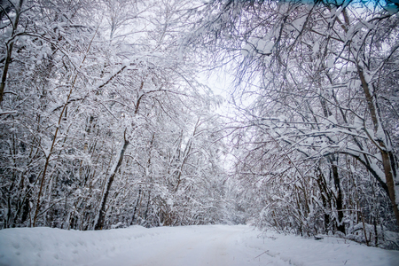 The road in the winter forest. Snow picture. Branches of trees in the snow hang over the road. Beautiful winter Stock Photo