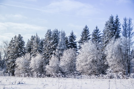 Winter landscape trees. Beautiful trees in the snow. Winter picture. Frozen trees