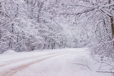 Winter snowy road. Branches of snowy trees hang over the road. Winter landscape. Journey in the winter. Winter picture