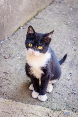 Small black and white kitten. A pet. Little animal. Black kitty Stock Photo