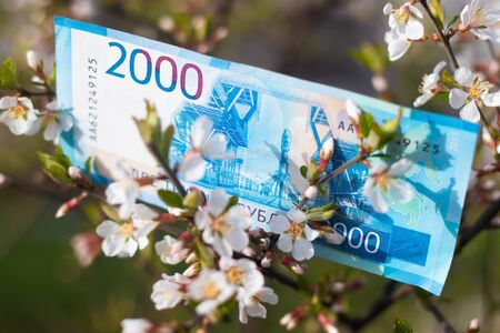 Paper money on the tree. Money grows on a tree. Blooming tree. Tree with money