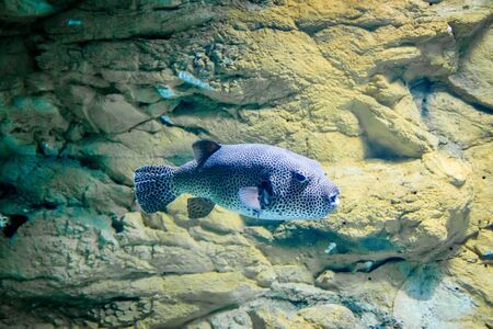 The inhabitants of the sea. Sea fish. Fish in the aquarium