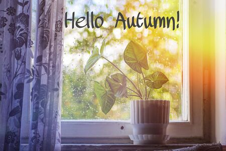 Banner hello autumn Plants and flowers