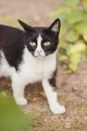 Sad street stray cat. Mammal animal Lonely cat sits and looks