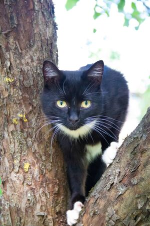Fluffy cat is sitting on a tree branch. Pet. Cat for a walk in the yard. The cat is climbing trees. Beautiful cat on a tree. 免版税图像