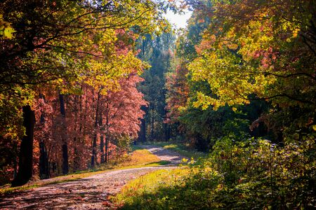 Autumn park landscape. Golden autumn . Sunny day in the autumn park with yellow trees. Beautiful landscape. Autumn background