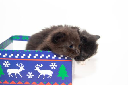 Little black kitten on a white background. Home pet. Kitten 3 weeks. Kid. Stock Photo - 132232521