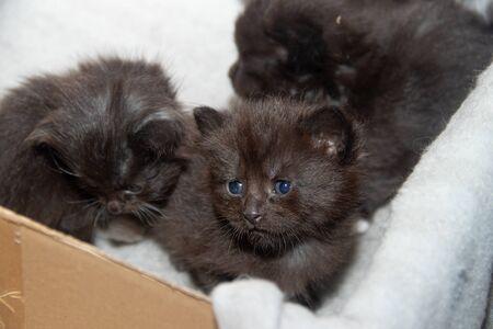 Little black kitten in a box. Pets. Kids.
