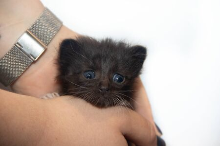 Little black kitten on a white background. Home pet. Kitten 3 weeks. Kid. Imagens