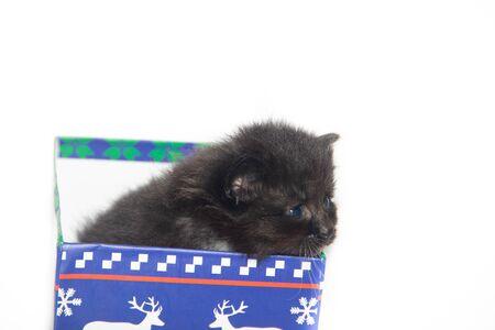 Little black kitten on a white background. Home pet. Kitten 3 weeks. Kid.