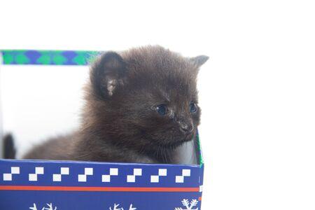 Little black kitten on a white background. Home pet. Kitten 3 weeks. Kid. Stock Photo - 132233926
