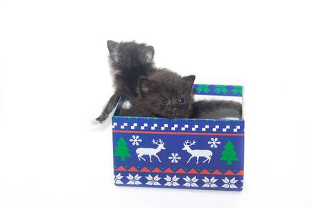 Mały czarny kotek na białym tle. Domowy zwierzak. Kociak 3 tygodnie. Dziecko.