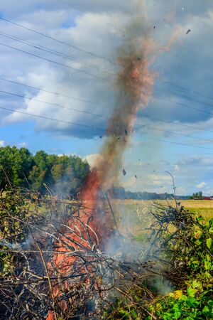 Burning sick bushes. Big fire. Smoke from the fire. Flame. Trees