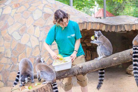 Feeding lemurs in the zoo. Lemurs in the zoo. Mammal. Animal in captivity . Animal in the zoo. Russia, Saint Petersburg 20 August 2019 Redactioneel