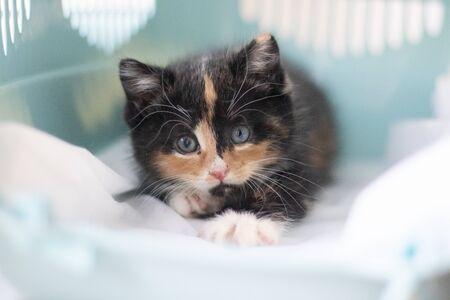 Kot siedzi w transporterze dla zwierząt. Zwierzak. Transport zwierząt. Mały kociak. Kot trójkolorowy Zdjęcie Seryjne