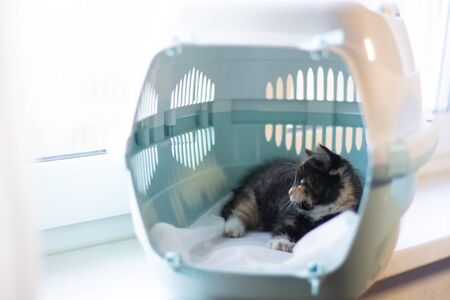The cat sits in a carrier for animals . A pet. Transportation of animals. Little kitten. Tricolor cat