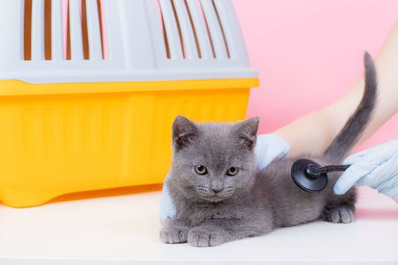 Cat at the reception of a veterinarian. Cat at the veterinary table. Veterinary Medicine Animal treatment. Pet Health An article about animals. Article about veterinary medicine. A gray cat lies on a table in the background carrying. British cat