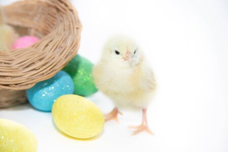Chicken in a basket and Easter eggs