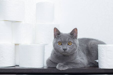 Cat and toilet paper