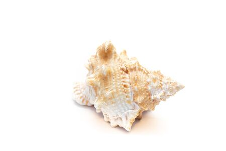 Seashell isolated on a white background. The inhabitants of the sea. Shell with place for text. An article about vacation and vacation at sea. Spa treatments
