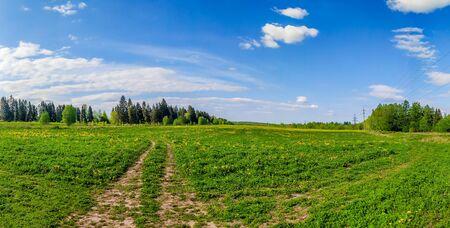 Panorama summer landscape in the field. Russian open spaces. Summer landscape. Flowers in the field. Blue sky. Copy spase Zdjęcie Seryjne