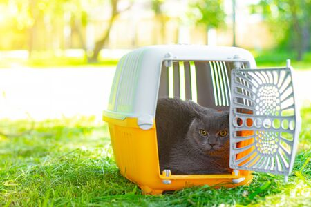 Cat in a yellow carrier on the grass in the Park .Cat in a carrier on the grass . Walking Pets. Cat in a carrier. Transportation of animals.