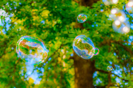 Background soap bubbles on the background of trees. Beautiful color background. Copy space. The concept of a children's holiday and a happy childhood. Bright background concept. Bubbles