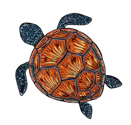 Illustration vectorielle d'une tortue de mer. Impression sur le thème de la mer Vecteurs