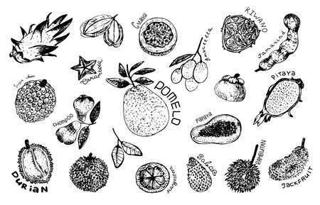 Tropical fruit design set. Fruit: mangosteen, papaya, durian, pomelo guava chompoo mangosteen carambola
