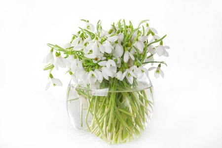 Bunch of snowdrops in transparent vase isolated on white photo