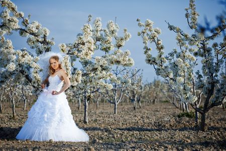 Beautiful bride among spring blossom trees Stock Photo - 4721685