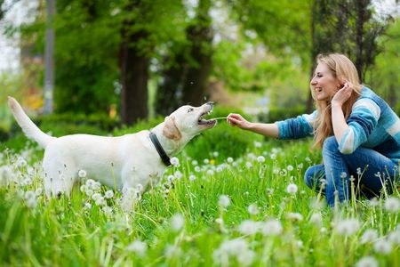 human kind: Beautiful woman with playful labrador on fresh green meadow