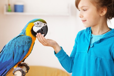 Portrait of a kid girl with her domestic ara parrot photo