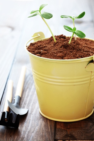 A small young plants in a pot photo