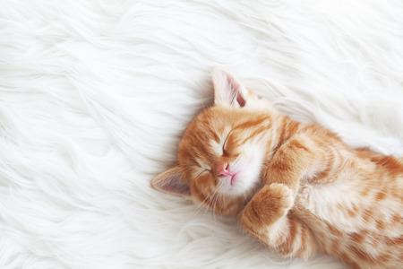 Schattige kleine rode kitten slaapt op bont witte deken Stockfoto