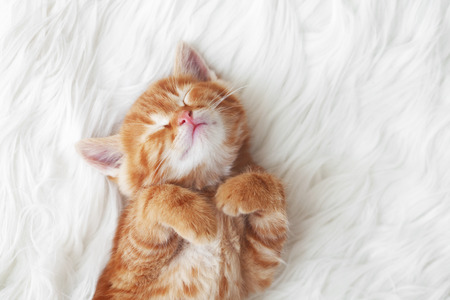 Cute little red kitten sleeps on fur white blanket Zdjęcie Seryjne