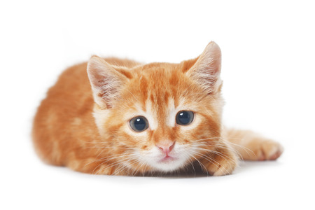 cute kittens: Cute red baby kitten isolated on white background