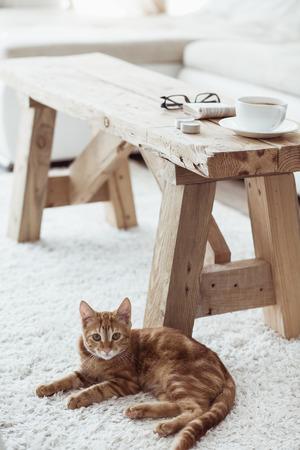 静物詳細は、素朴なベンチと横たわっている猫にコーヒー 1 杯白のカーペットの上付近します。