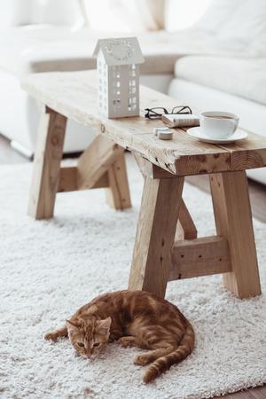 Stilleven informatie, een kop koffie op rustieke bankje en een kat liggen in de buurt van het op wit tapijt Stockfoto